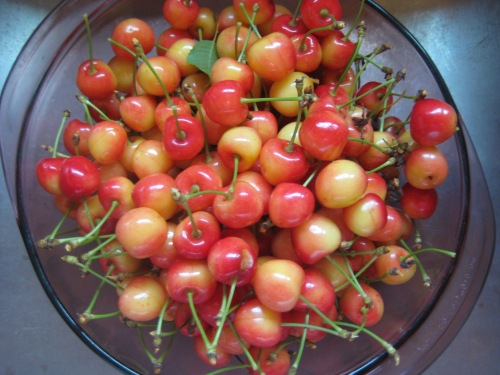Cherries gleaned from the neighbor's tree.  Aren't they beautiful?